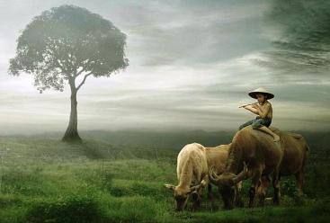 Kenangan Anak Gembala