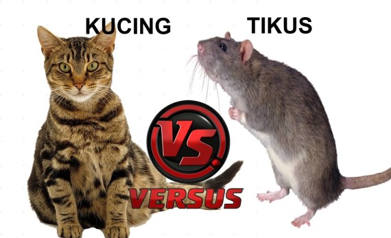 Tikus vs kucing siapa yang menang