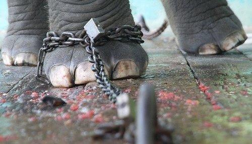 Rantai Gajah di Kepala Kita