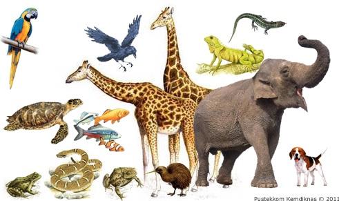 Otak Reptil dan Mamalia