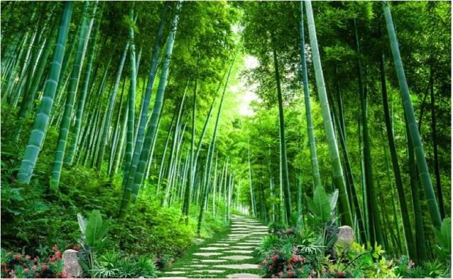 Ketegaran Pohon Bambu